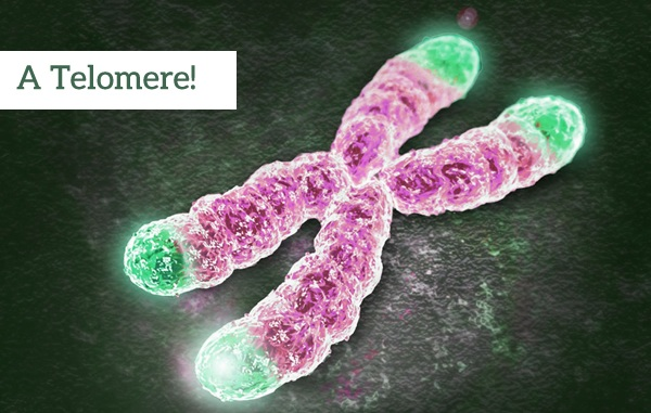 Foods Good For Your Telomeres