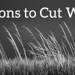 Seven Reasons to Cut Wheat